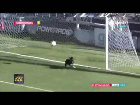 Weird News - Stray Dog Makes Unbelievable Save After Goalie Turned Over The Ball