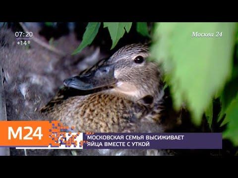 Московская семья высиживает