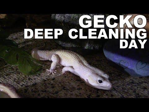 Leopard Gecko Tank Cleaning