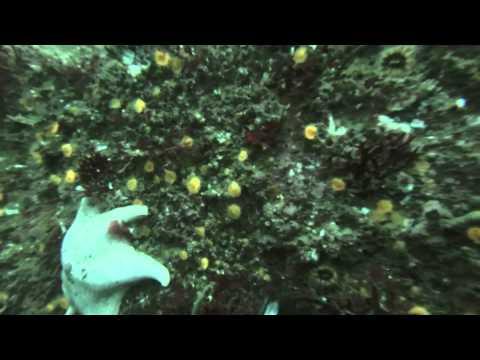 Monterey breakwater Wall Dive 1 8-24-14 Scuba