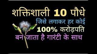 दुनिया के 10 चमत्कारी पौधे जिसे लगाकर हर कोई 100% करोड़पति बन जाता है Plant and tree