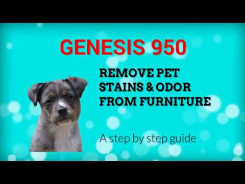 How To Remove Pet Stains Odor From Furniture