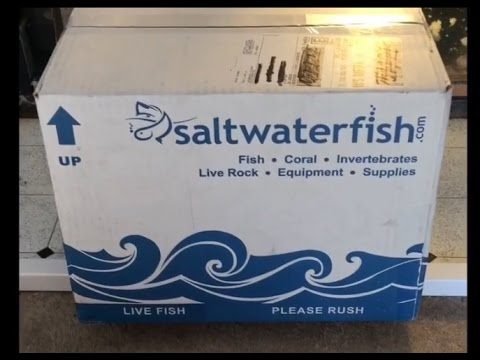 My #1 - Worst Online Saltwater fish seller