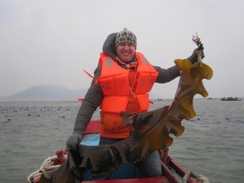 Matt Thompson: Farmed Seaweed