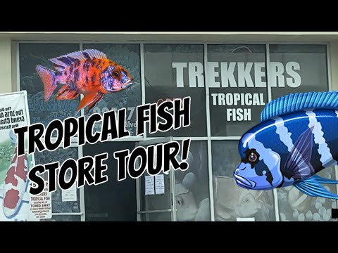 Tropical Fish STORE TOUR! Are Fish Stores Struggling?