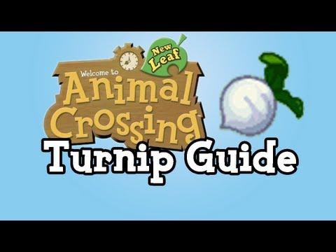 Turnip Guide :: Animal Crossing New Leaf