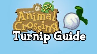 Turnip Guide :: Animal Crossing New Leaf