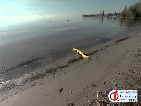 Video thumbnail of Salamandra robotica II