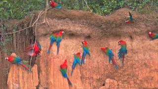 Peter A.Schmid: Birdology #1