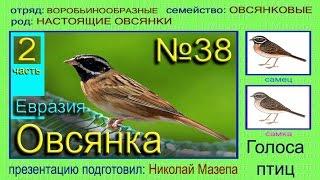 Овсянка. 2 часть. Евразия Россия. Голоса птиц