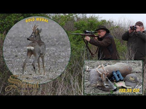 Hunting Gold Medal Roebuck In Backa Palanka