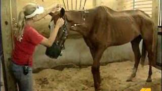 Howard County Farm Rehabbing Abused Horses
