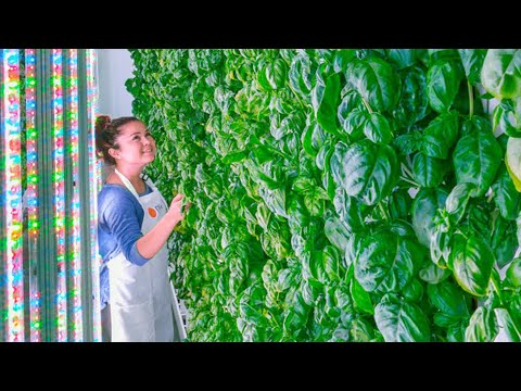 The future of indoor, vertical farm technology - Compilation