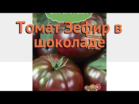 Томат обыкновенный Зефир в шоколаде 🌿 обзор: как сажать, семена томата Зефир в шоколаде