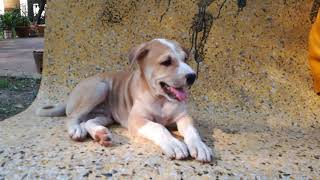 Cute Baby Dogs - Baby Dogs - Dogs Playing - Dogs Videos - Funny Dogs
