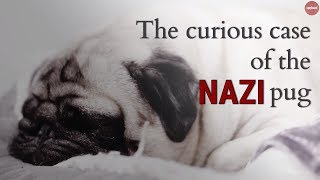 The Curious Case of the Nazi Pug