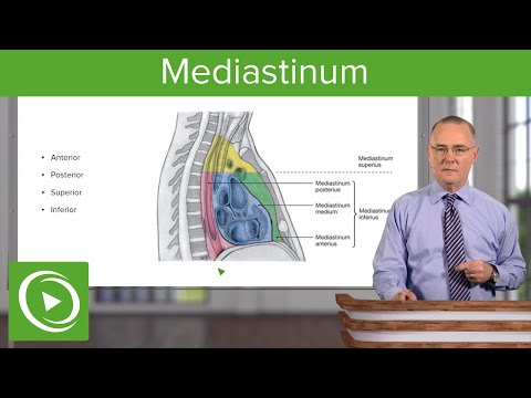 Mediastinum – Anatomy   Medical Education Videos
