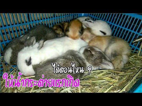 ให้น้ำกระต่ายแรกเกิดตอนไหนดี