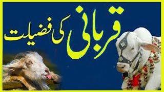 qurbani ki fazilat in urdu bayan sm ali urdu teacher