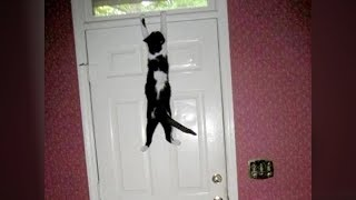 Animals Never Fail To Make Us Laugh Super Funny Animal - Cats who tried so hard but failed in the most hilarious ways