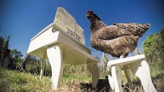 Igorrr Chicken Sonata Full version.mp3