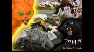 Коты Воители Дьявольский цветок