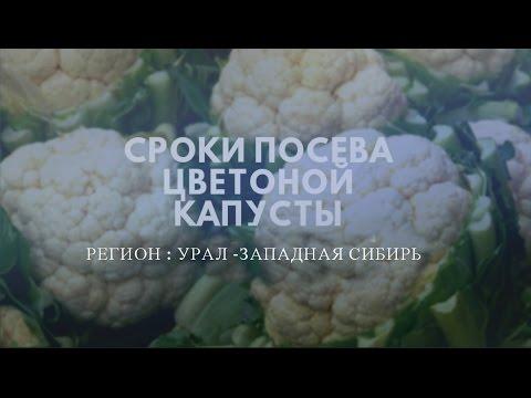 Сроки посева цветной капусты Урал и Западная Сибирь