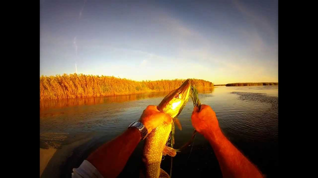 La pêche de la photo des carpes et les carpes