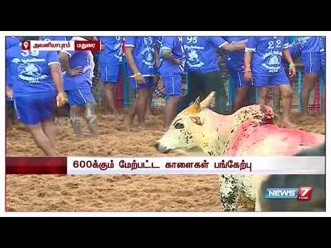 அவனியாபுரம் ஜல்லிக்கட்டு 2018   Avaniyapuram Jallikattu 2018   News7 Tamil