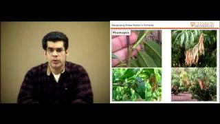 Recognizing Stress Factors in Orchards - Desmond R. Layne - Everything About Peaches