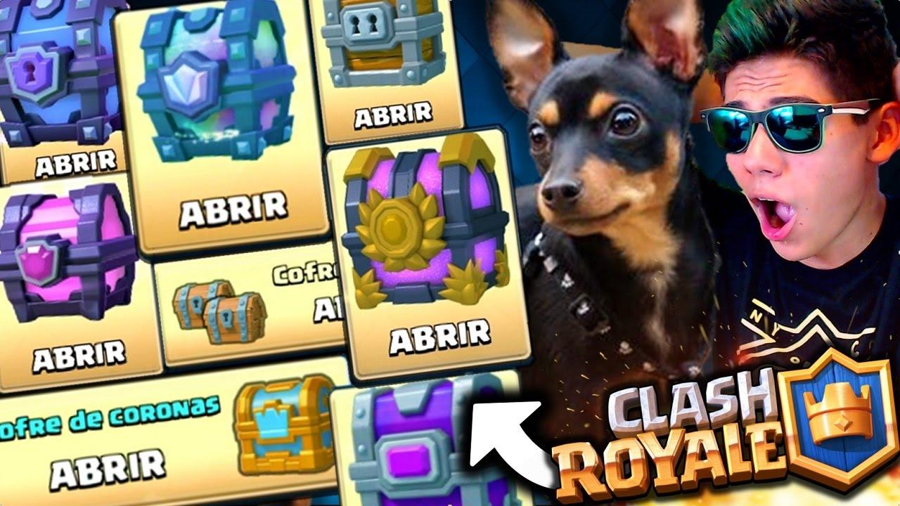 Mi Perro Abre Todos Los Cofres De Clash Royale Antrax