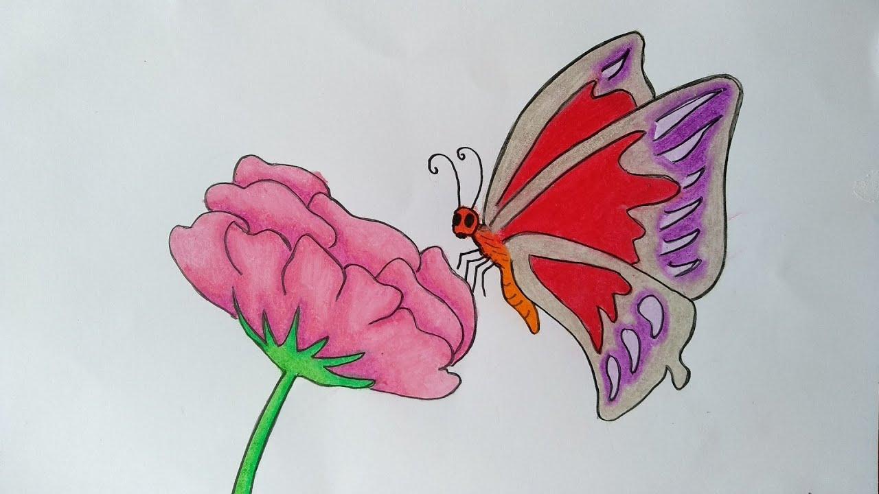 Cara Menggambar Bunga Dan Kupu Kupu Menggambar Dan Mewarnai Kupu Kupu Cantik Youtube