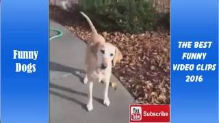 Funny dog Video Clips 2016