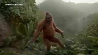 Прикольное видео с танцующей обезьяной