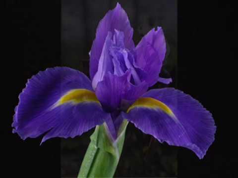 Iris accordi biagio antonacci - A finestra accordi ...