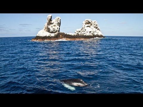 Socorro Tauchsafari mit der Rocio del Mar - Sondertour von Tauchertraum