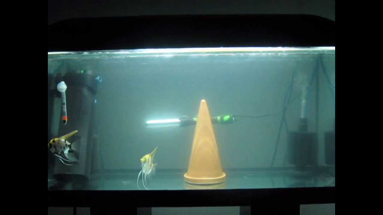 Breeding angelfish tank set up youtube for Koi fish tank setup
