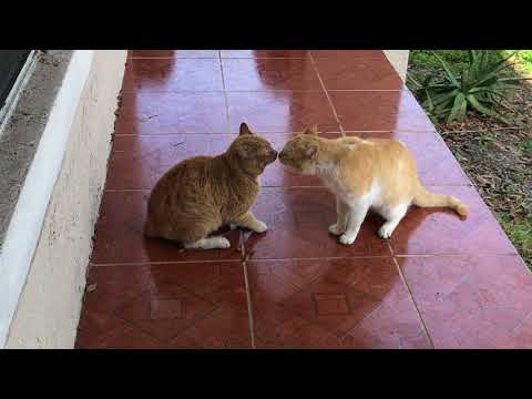 Cat Fight over territory.