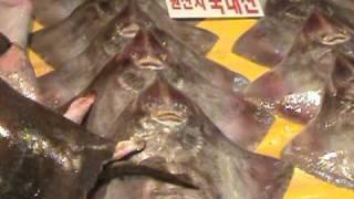 OSOBLIWE ZWIERZETA MORSKIE - targ rybny w Seulu