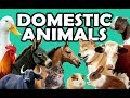 DOMESTIC ANIMALS Learn Domestic Animals Sounds And Names For Children Kids And Toddlers mp3