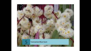 Tasmania - Floral Emblems - Australian Plant Information