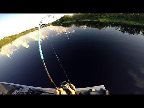 Florida Alligator Hunt 8' - Look At That Rod!