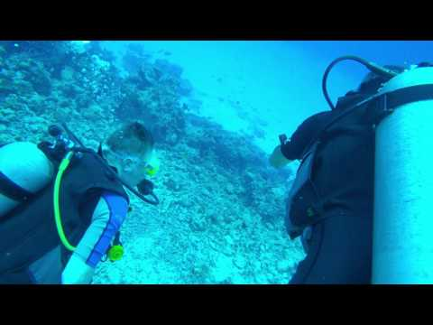 Diving in Maldives - Aquarium (North Male Atoll) Complete Dive 4K