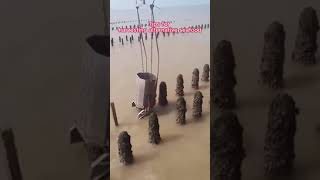해산물 양식장