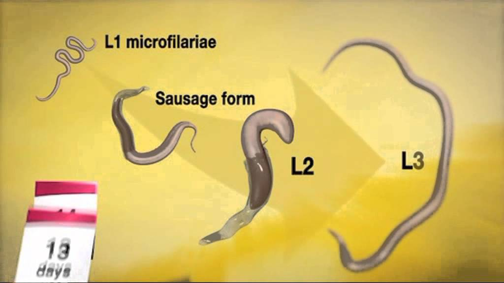 paraziták megelőzése és kezelése)