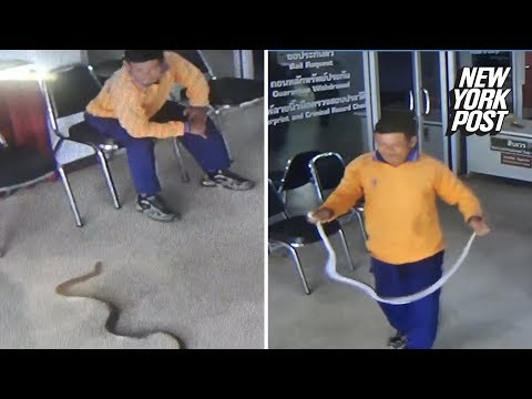 Snake attacks man in Thailand police station | New York Post
