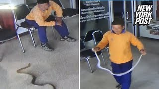 Snake attacks man in Thailand police station | New York Post