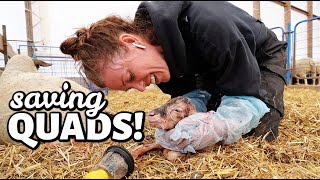 SAVING MY FIRST SET OF QUADS!! | Spring Lambing 2021 | Vlog 428