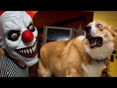 FUNNY Dogs Scared of Halloween Compilation  Funny Babies and Pets