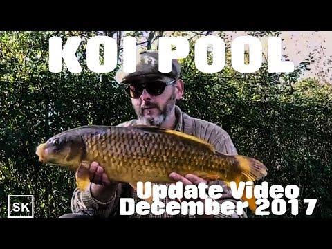 Koi Pool - An Update Video - Carp Fishing